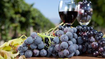 Wine-Wellness-Weekend