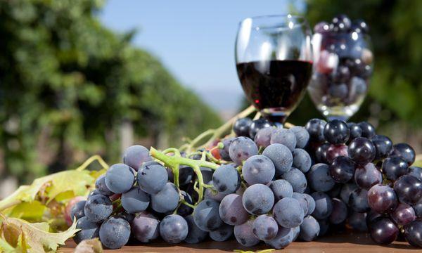 Kleine Weinreise