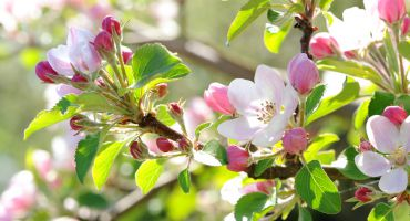 Epicure spring week