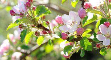 Settimana della primavera