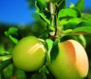 Godete una settimana da sogno per buongustai attorno questo frutto...(Soggiorno di una settimana durante questo periodo)
