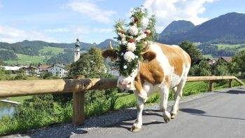 Kirchtag festival & cattle drive | 5 nights