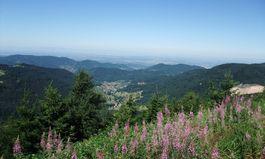 Schwarzwald Meet & Greet