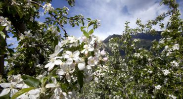 Hiking Weeks - when the apple trees blossom
