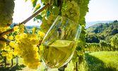 Wine & Dine 2015