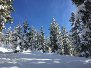 Winterwandern & Spa