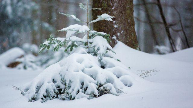 Winterruhe - wenn es still wird